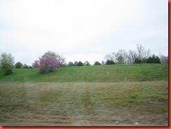 paarse heideboompje