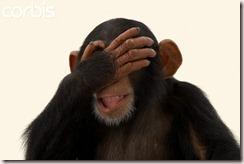 Face Palm Pic Chimp