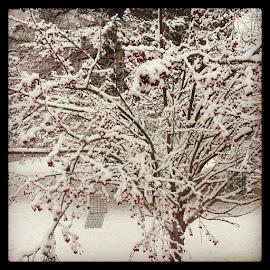 by Jen Sherman - Instagram & Mobile iPhone
