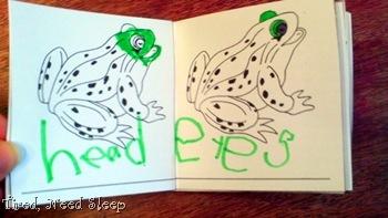 frog nomenclature 2