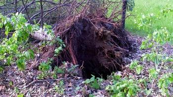 tornado damage (1)