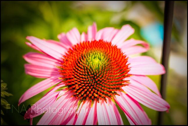 Flowersbloom-2