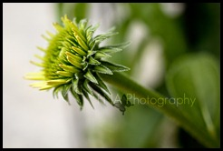 Flowersbloom-5