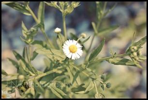 Flowersbloom-10