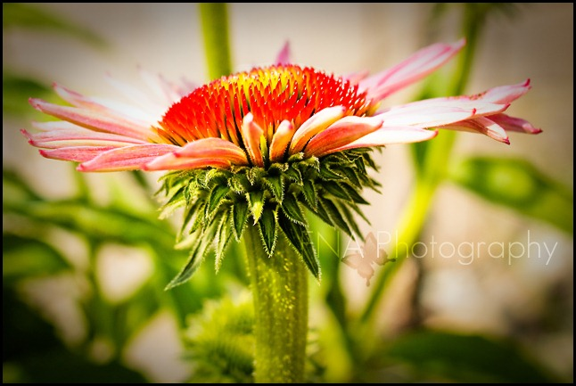 Flowersbloom-14