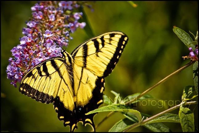 flower-butterfly-6