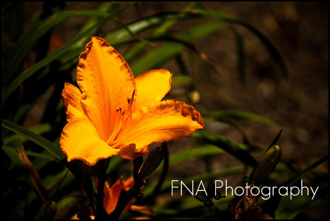 flower-butterfly-10