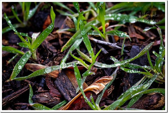little drops of rain (10)