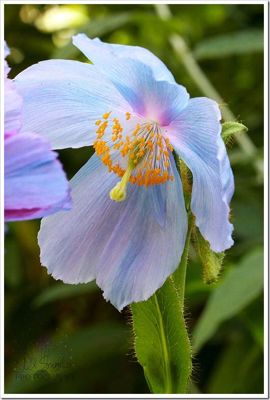 flowers-0610