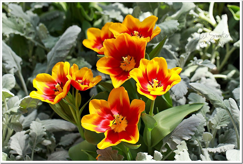flowers-0744
