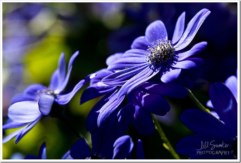 flowers-0529