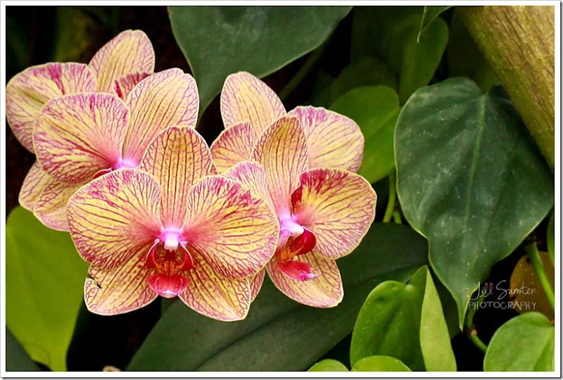 flowers-0802
