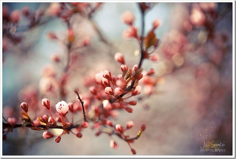 spring-1518