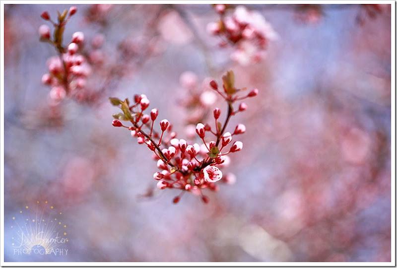 spring-1521