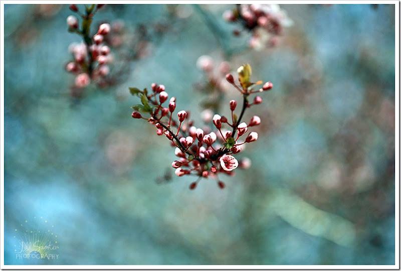 spring-1522