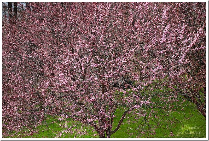 spring-1496