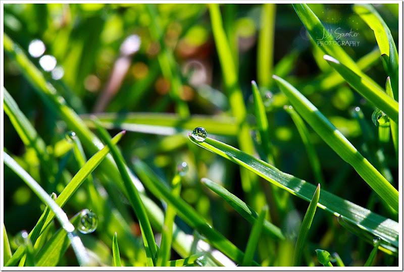 grass-1653