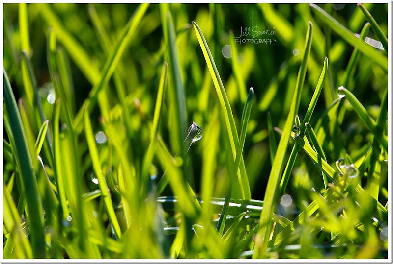 grass-1666