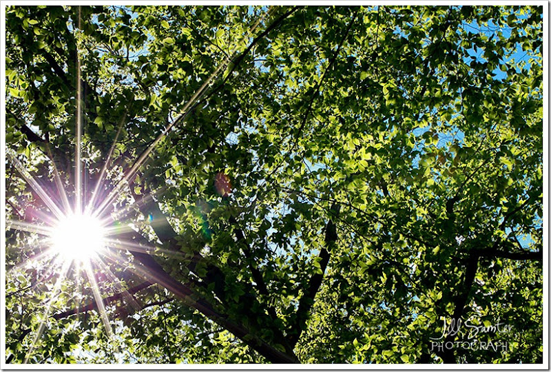 sunflare-3263