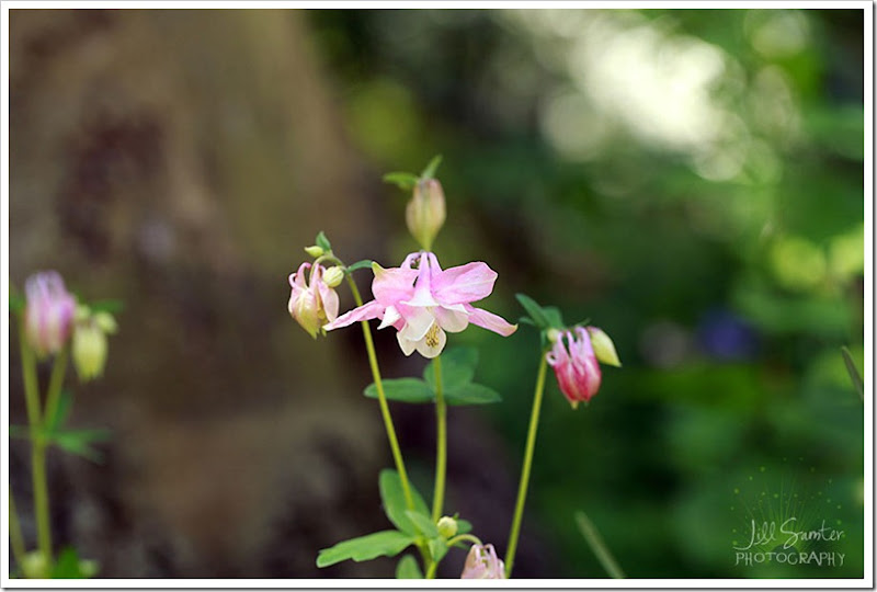 flowers-3203
