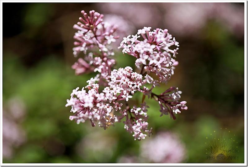 flowers-3207