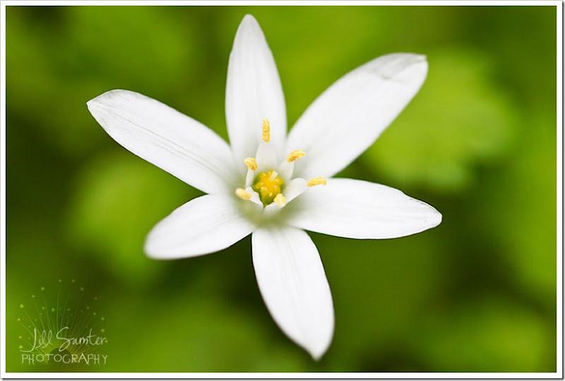 flowers-3378