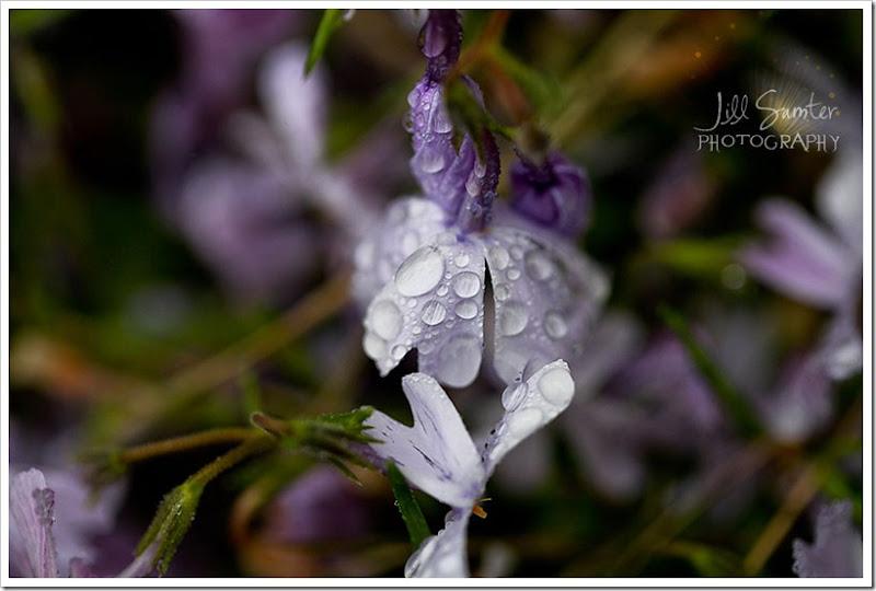 raindrops-4063