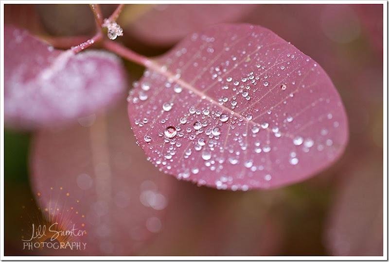 raindrops-4071