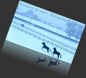 HORSES.SNOW