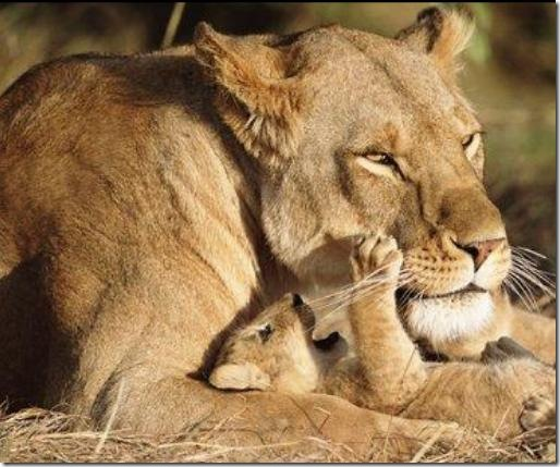leona y retoñor