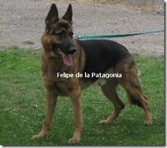 felipillo_1