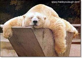 tired_bear