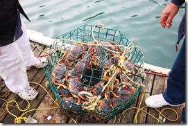 crab condo
