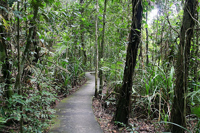 A path going through Daintree Rainforest in Queensland, Australia