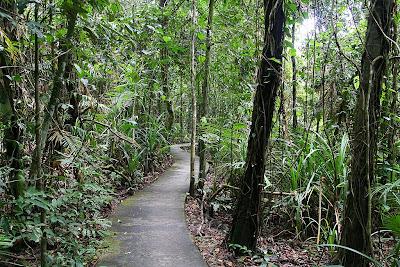 A path going through Daintree Rainforest in Queensland, Australia