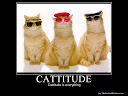 CATTITUDE