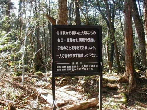 aokigahara forest japan. Aokigahara Forest