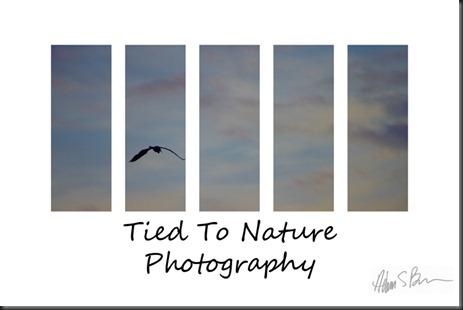 Fine Art Heron