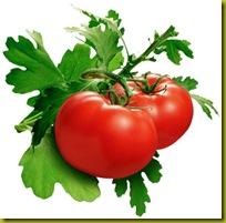 organic_tomatoes
