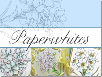 Paperwhites Graphic