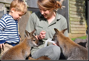 Fern & Zach feeding Wallabies 2 (resized)