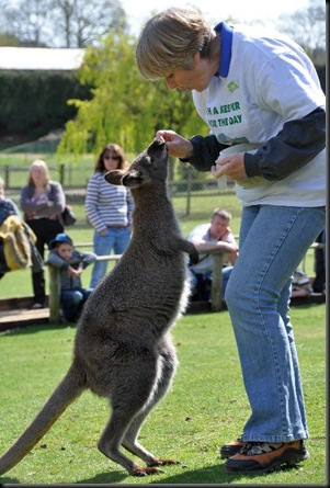 Sue Betts feeding Wallaby 12 April 11 DSC_1122