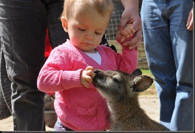 Teigan Martin feeding Wallaby (resized) DSC_0400