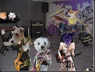 Paws Bang... BAND