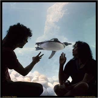 Saludant al pingüí