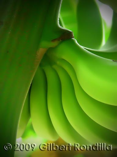 Bananas details, Tagaytay, Philippines