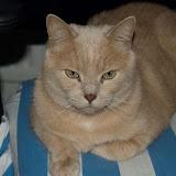 Pedro poserar från min datastol
