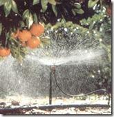 irrigacao1