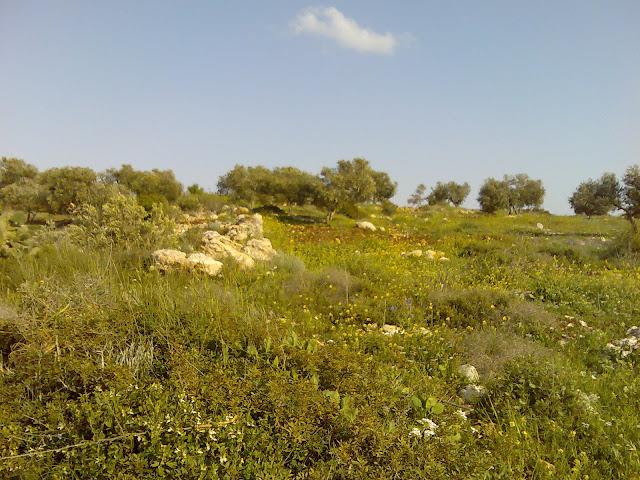 صور من منطقة ظهر 3aLa2037