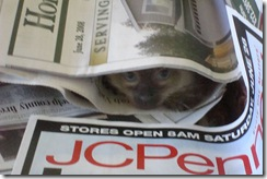 Discount Newspapers Cat in paper